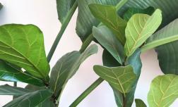 5 loại cây cảnh siêu dễ trồng: Trồng một chậu ở nhà, nhân khí sẽ được cải thiện nhiều lần ngay lập tức
