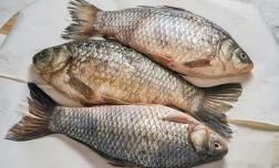 Không mua 5 loại cá cho con ăn, không những phí tiền mà còn ảnh hưởng đến sức khỏe dinh dưỡng