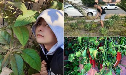 'Mát tay' trồng cây, diễn viên Hoàng Anh khoe khu vườn nhỏ xinh, trĩu trái ở Mỹ