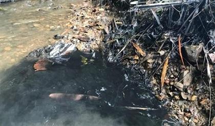 Bắt 2 đối tượng liên quan vụ đổ trộm dầu thải đầu nguồn sông Đà