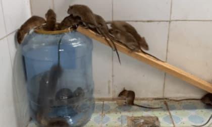 Làm bẫy chuột cực đơn giản và hiệu quả bằng vỏ bình nước 20 lít