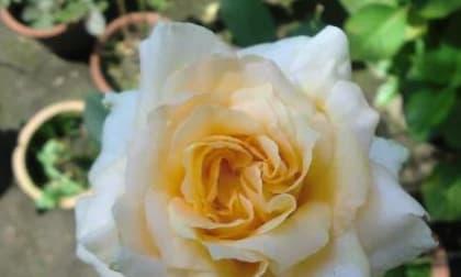 Kiểm tra tâm lý: Chọn một bông hoa may mắn bạn thích? Xem bạn sẽ gặp may mắn gì?