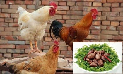 Bác sĩ tiết lộ: Đây là phần trên con gà dễ gây ra các bệnh ung thư nhiều nhất khi ăn
