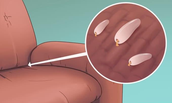 5 dấu hiệu cho thấy đã có bọ rệp giường trong nhà của bạn