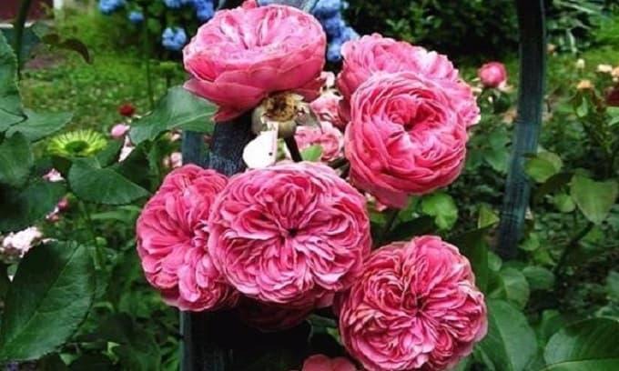 Tại sao cây hoa mua từ cửa hàng về nhà thường không sống lâu? Đây là lý do!