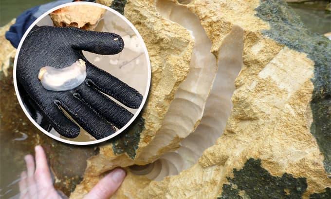 Phát hiện loài hà biển kỳ lạ: Ăn đá và thải ra cát!