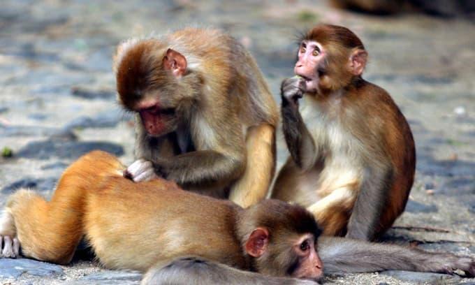 Đối với những con khỉ, nếu sinh vào những tháng này thì cuộc đời của họ sẽ thật là vất vả!