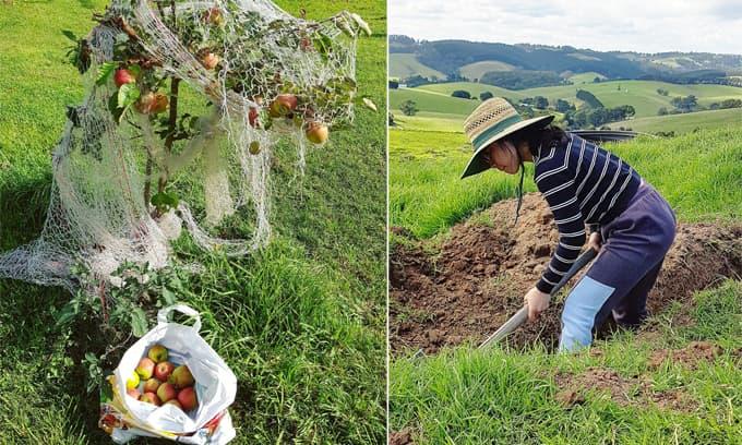 Cô giáo người Việt theo chồng sang Úc định cư khoe trang trại tự tay vun xới khiến dân tình trầm trồ