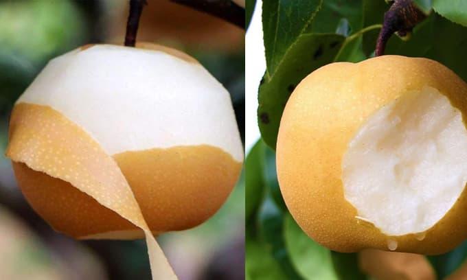 Quả gì chín vào mùa thu? Những điều kiêng kỵ khi ăn hoa quả vào mùa thu là gì?