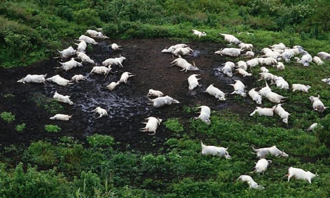 'Hồ giết người' châu Phi từng cướp đi sinh mạng của gần 1.800 người, sau khi rút cạn nước, các chuyên gia đã tìm ra 'hung thủ' thực sự