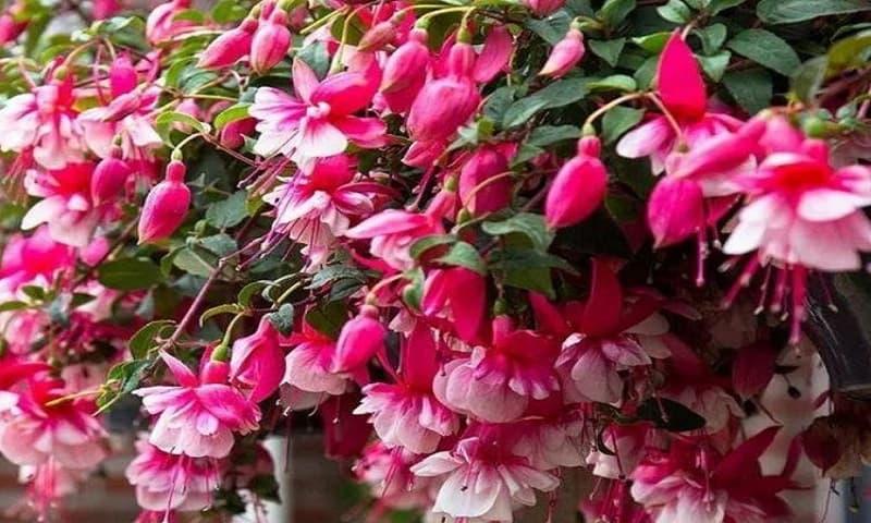 3 loại hoa thích hợp nhất cho người mới trồng, hoa nở cực nhiều và đẹp