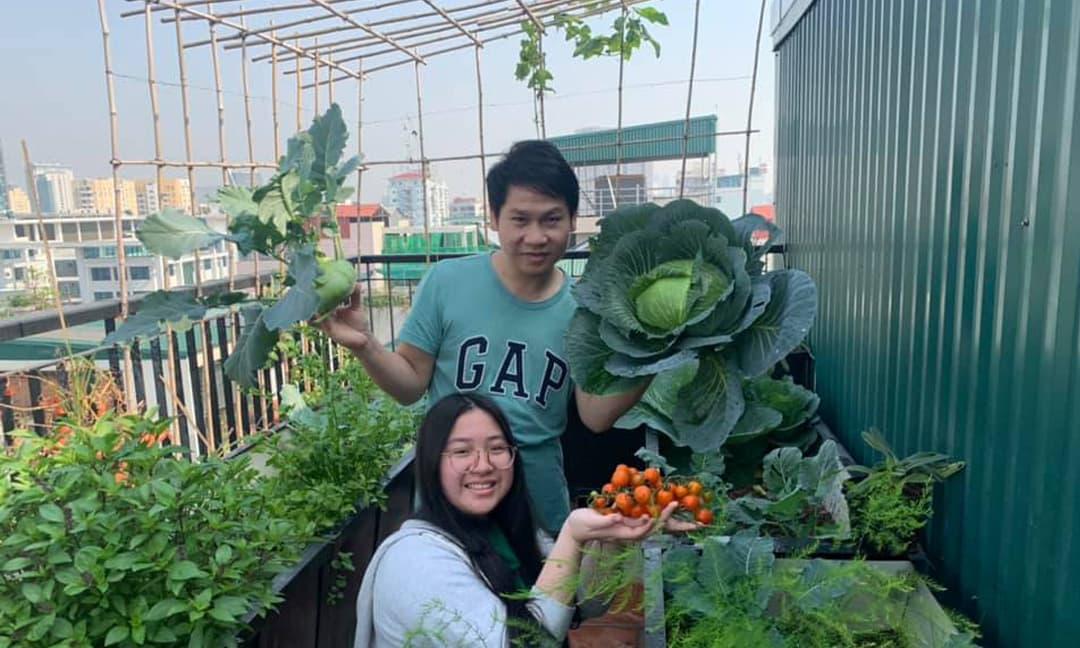 Ca sĩ Trọng Tấn và con gái thu hoạch rau trồng trên tầng thượng