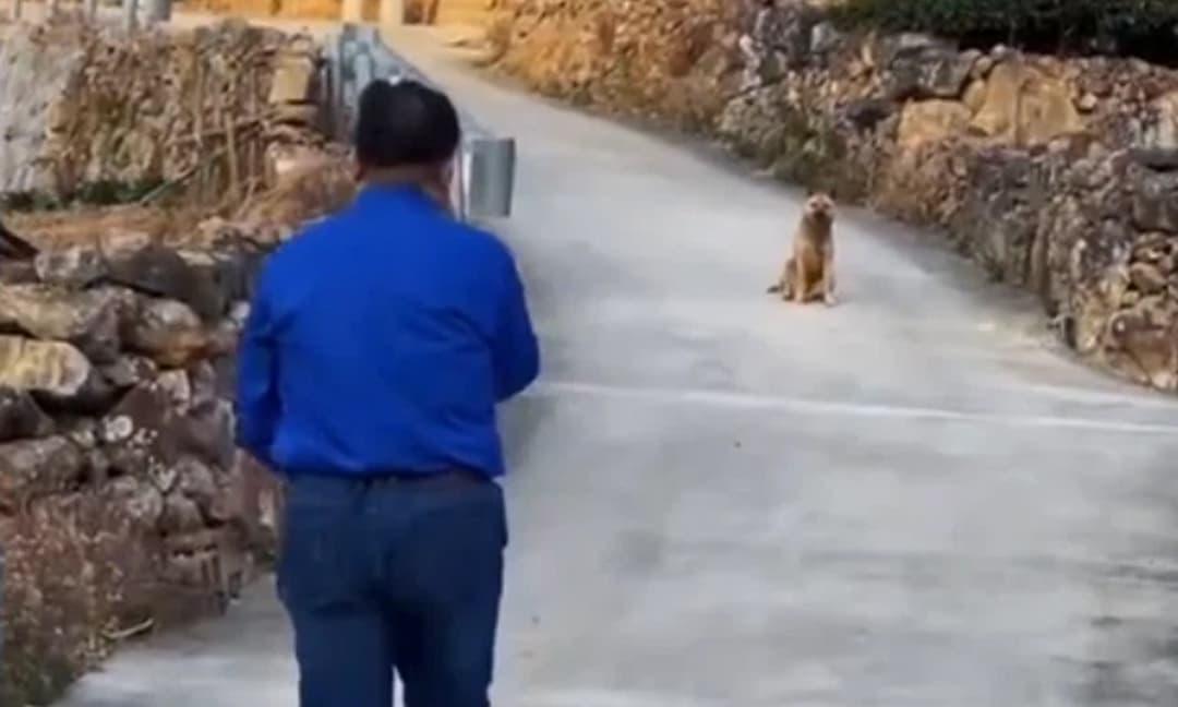 Xúc động khoảnh khắc chia ly của chú chó già, từ biệt chủ rời nhà tìm nơi để... chết