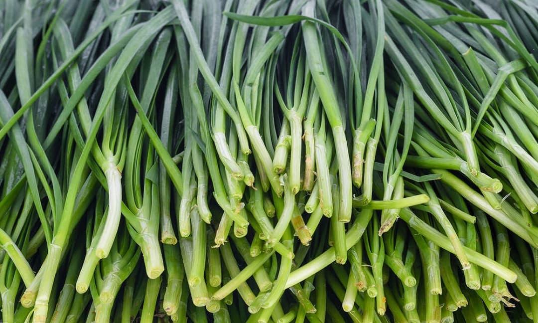 Khi mua tỏi tây, bạn nên chọn loại lá rộng hay lá hẹp? Người nông dân trồng rau: 'Đừng lựa chọn sai, nó không ngon và lãng phí tiền bạc'