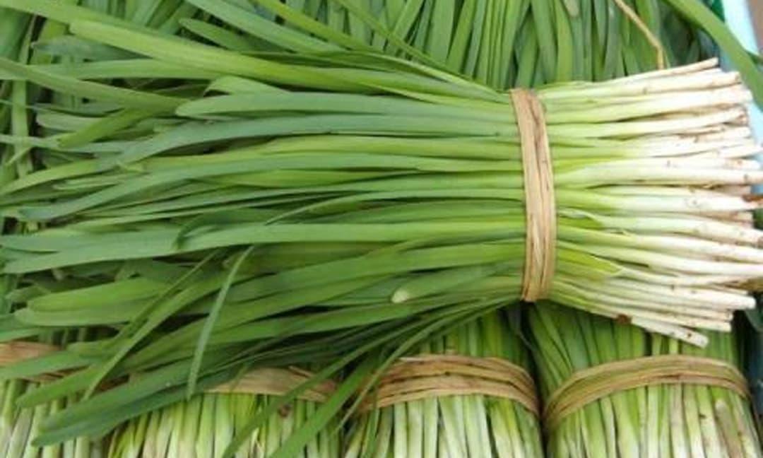 Lương y Nguyễn Thị Thái, thuốc nam, thuốc dân tộc
