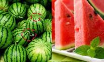 Người thông minh sẽ ghi nhớ 5 điểm này khi mua dưa hấu! Đảm bảo dưa ngọt sắc, đỏ đến tận cùi