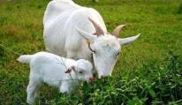 Tại sao con người có thể giao phối mỗi ngày, trong khi động vật chỉ có một 'mùa nắng nóng' cụ thể