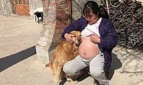 Khoảnh khắc khó tin của chú chó và cô chủ đang có bầu