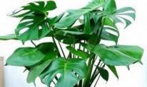 4 loại cây thích hợp cho người mới trồng, không phải bận tâm chăm sóc nhiều, tài lộc cả năm sẽ sung túc