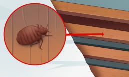 4 dấu hiệu cơ bản để nhận biết rệp đang 'làm tổ' trên giường nhà bạn