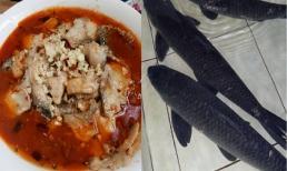 Đừng đến nhà hàng để ăn, dạy bạn cách làm một món cá 'siêu độc và ngon' ngay tại nhà