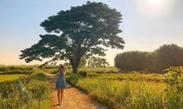Ghé thăm Huế, check-in 'Cây cô đơn' nổi tiếng trong phim 'Mắt biếc'
