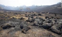 Những con số khủng khiếp về thảm họa cháy rừng ở Australia khiến nhiều người xót xa