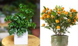 5 loại cây thường được chọn để trưng bày ngày Tết với ý nghĩa tài lộc và may mắn
