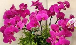 Mừng tân gia, mừng thọ, khai trương... nên chọn hoa, cây cảnh nào tặng để không bị chê là thiếu hiểu biết?