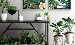 Cho dù ngôi nhà nhỏ đến đâu, bạn vẫn có thể tạo những khu vườn nhỏ xinh này!