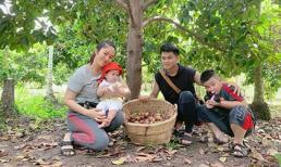 Lê Phương cùng chồng con thu hoạch trái cây nặng trĩu tại trang trại riêng