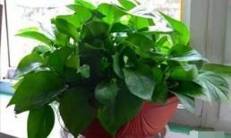 3 loại cây cảnh được gọi là 'không bao giờ chết', quanh năm xanh lá, người bận và lười mấy cũng trồng tốt
