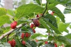 5 loại cây phá phong thủy, tuyệt đối không được trồng trong nhà