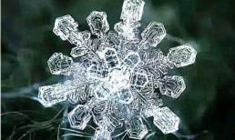 Kiểm tra tâm lý: Bạn thích bông tuyết nào từ cái nhìn đầu tiên? Ai là người bạn không bao giờ quên