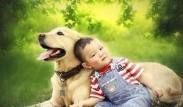 6 loại người sau đây, khuyên bạn không nên nuôi chó, vì không phù hợp!