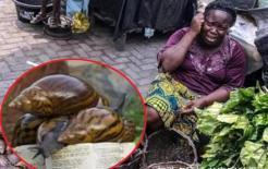 Người châu Phi thà ăn sinh vật mang virus đến mức tuyệt chủng, còn hơn ăn hải sản! Tại sao?