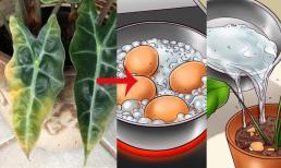 8 bệnh phổ biến mà cây trồng trong nhà thường gặp và cách chữa