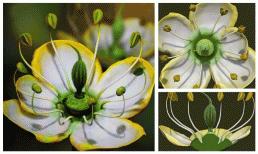 Phát hiện đóa hoa từ thời thượng cổ 15 triệu năm trước cho thấy sự kỳ diệu của tự nhiên