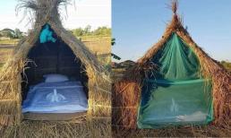 Thiết kế homestay theo kiểu 'một túp lều tranh 2 trái tim vàng' giữa cánh đồng khiến dân mạng tranh cãi