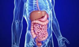 Tim, gan, ruột, phổi và thận sợ gì nhất? Hãy sớm nhận biết để phòng ngừa và bảo vệ sức khỏe tốt hơn