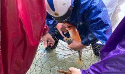 Phố xá ngập trong biển nước, người dân TP Hà Tĩnh mang bu gà ra đường bắt cá