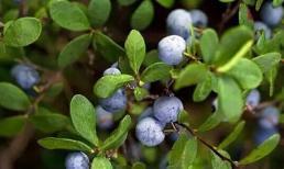Đối với phụ nữ trung niên, nên ăn thêm 3 loại trái cây để làm trắng da, dưỡng da, và rất nhiều lợi ích khác