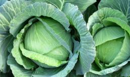 Những ai thích ăn bắp cải hãy chú ý, bắp cải tuy có nhiều lợi ích nhưng hai thứ này không thể ăn cùng