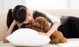 7 loại chó này được công nhận là 'dễ huấn luyện' và rất đáng nuôi!