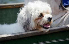 Chó thường làm 7 điều này trước khi chết. Bạn đã sẵn sàng chưa?