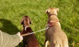 Nếu là người mới nuôi chó thì đừng mắc phải 4 sai lầm sau đây, chúng có hại cho chó cưng của bạn