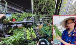 Khu vườn rau quả sạch trên sân thượng biệt thự của Cẩm Ly