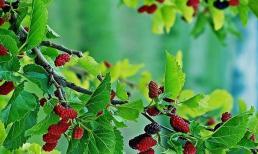 Muốn tránh xa xui xẻo nhất định xung quanh nhà không được trồng những loại cây này