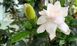 Chọn 4 loại hoa trên ban công, tươi và đơn giản, trang nhã và đẹp, tươi và dễ chịu