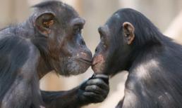 Tại sao có quá nhiều đồng tính luyến ái ở động vật, và tình yêu đích thực là giữa những người đồng giới?